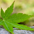 Leaf green — Stockfoto