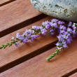 Lavender flower — Foto Stock