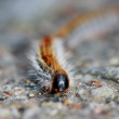 Foto Stock: Worm in foreground