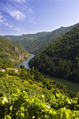 Canyon of sil, spain — Stock Photo
