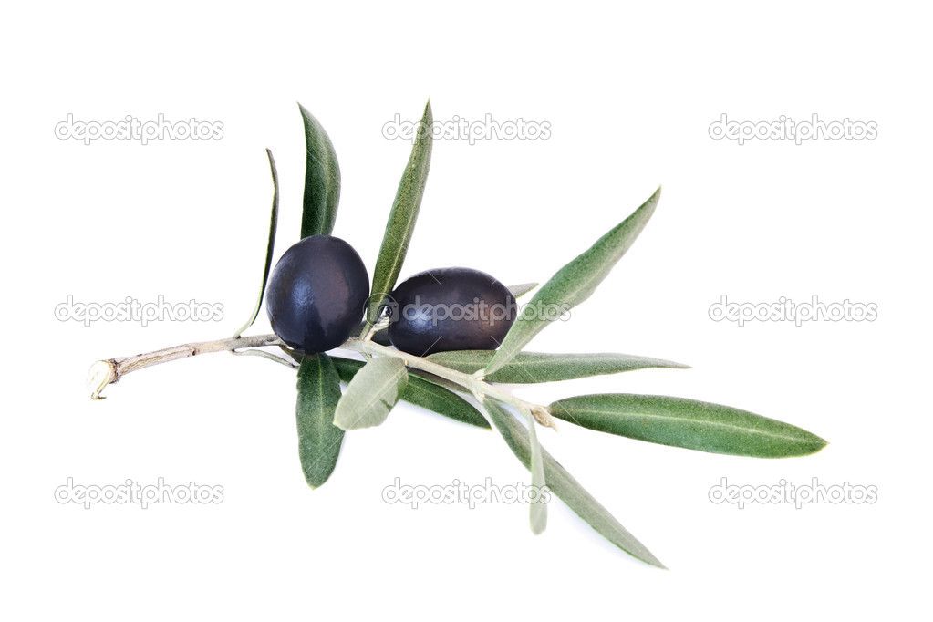 Fresh olives on the olive branch isolated on white background ...