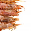 Fresh seafood, shrimps and crustaceans — Stock Photo #7422219