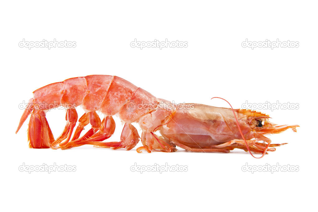 Fresh seafood, shrimps and crustaceans — Stock Photo #7421995