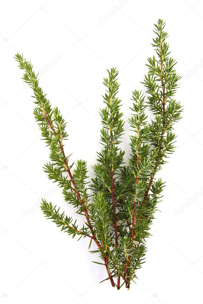Natural branches isolated on white spruce — Stock Photo #7729793
