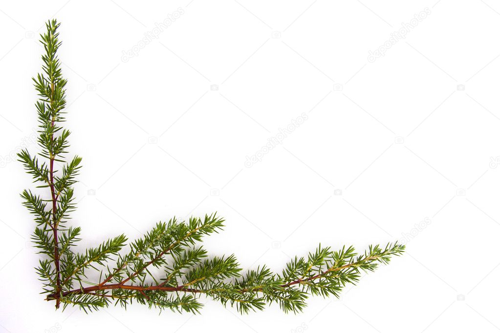 Natural branches isolated on white spruce — 图库照片 #7729809