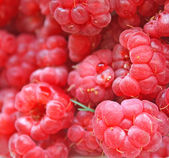 Juicy raspberry — Stock Photo