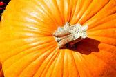 Pumpkin — Foto Stock