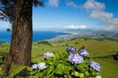 Azores - Sao Miguel — Stock Photo