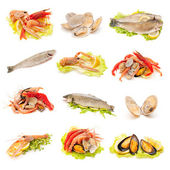 Shellfish and fish — Stock Photo