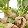 Sugar beet — Stock Photo #6852539