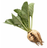 Sugar beet — Stock Photo