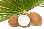 Kokosy — Zdjęcie stockowe