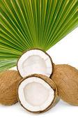 Kokosnoten — Stockfoto