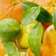 Fresh oranges - Foto de Stock