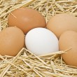 Stock Photo: Fresh eggs