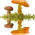 Seasonal mushrooms — Stock Photo #6921553