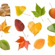 Seasons leaves — Stock Photo