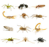 Variety of insects — Stock Photo