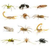 Wiele owadów — Zdjęcie stockowe