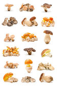 食用キノコ — ストック写真