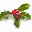 Holly on white background — Stock Photo