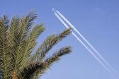Flugzeug über Palme — Stockfoto