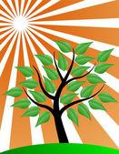 Tree stylized with sunburst — Stock Vector