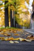 Laef autumn — Stock Photo