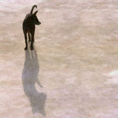 Shadow dog — Стоковое фото