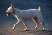 Trotting dog — Stock Photo