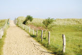 Baltic sea dunes — Stock Photo