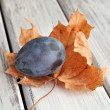 Stock Photo: Plum on Leaf