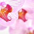 Pink orchids — Stock Photo #6848198