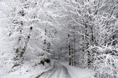 Road through the Winter Forest — Stock Photo