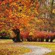 Autumn in the Park — Stock Photo #7492796