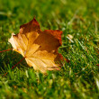 Leaf in grass — Stock Photo
