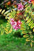 Pink flowers against green leaves — Stock Photo
