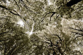 Forest tissue - treetops abstract view in sephia — Stock Photo