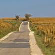 Beautiful countryside road through cornfields — Stock Photo