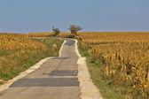Krásné přírody cesta skrze kukuřičných polí — Stock fotografie