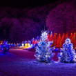 Christmas fantasy - pine trees in x-mas lights — Stockfoto