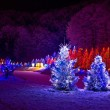 Christmas fantasy - pine trees in x-mas lights — Stock Photo