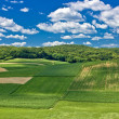Beautiful green scenery landscape in spring time IV — Stock Photo