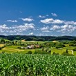 Beautiful green scenery landscape in spring time II — Stock Photo #7776621
