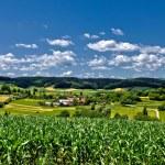 Beautiful green scenery landscape in spring time II — Stock Photo