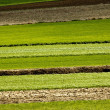 Agriculture layers - fields and meadows — Stock Photo