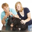 Checkup at the Veterinarian — Stock Photo