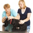 Stock Photo: Female Vet Examining Patient