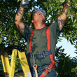 Tree Surgeon on Ladder — Stock Photo