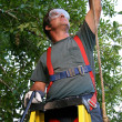 Stock Photo: Tree Trimmer Safety Harness